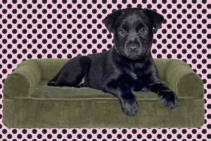 FurHaven Sofa-Style Orthopedic Pet Bed Sofa Style  at Woot!