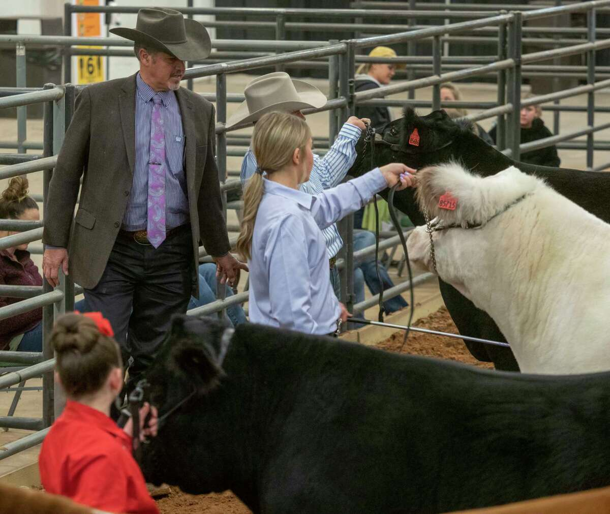 Judge Joel Judge looks over steers 01/15/2021 at the Midland County Horseshoe Arena during the 2021 Midland County Livestock Association Show. Tim Fischer/Reporter-Telegram