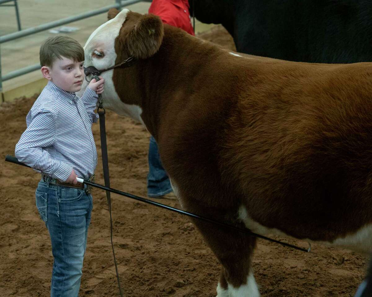 Paul Caudle, home schooled, presents his steer 01/15/2021 at the Midland County Horseshoe Arena during the 2021 Midland County Livestock Association Show. Tim Fischer/Reporter-Telegram