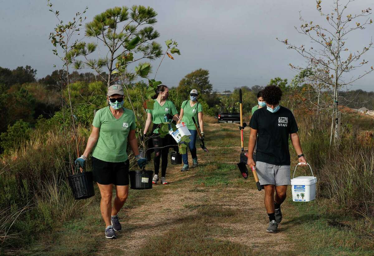 """Houston Wilderness volunteers and staff get ready to plant 120 native """"Super Trees"""" at the Bayport Terminal Berm, the planting of 1,500 trees there, on Friday, Nov. 20, 2020, in Seabrook, Texas. """"Super Trees"""" are trees with high rates of carbon absorption, flood mitigation, and greenhouse gas absorption. The effort is part of Houston Wilderness's Gulf Houston Regional Conservation Plan, which calls for a 4 percent increase in organic carbon absorption every year to benefit air quality and help reduce urban heat spikes in the region."""