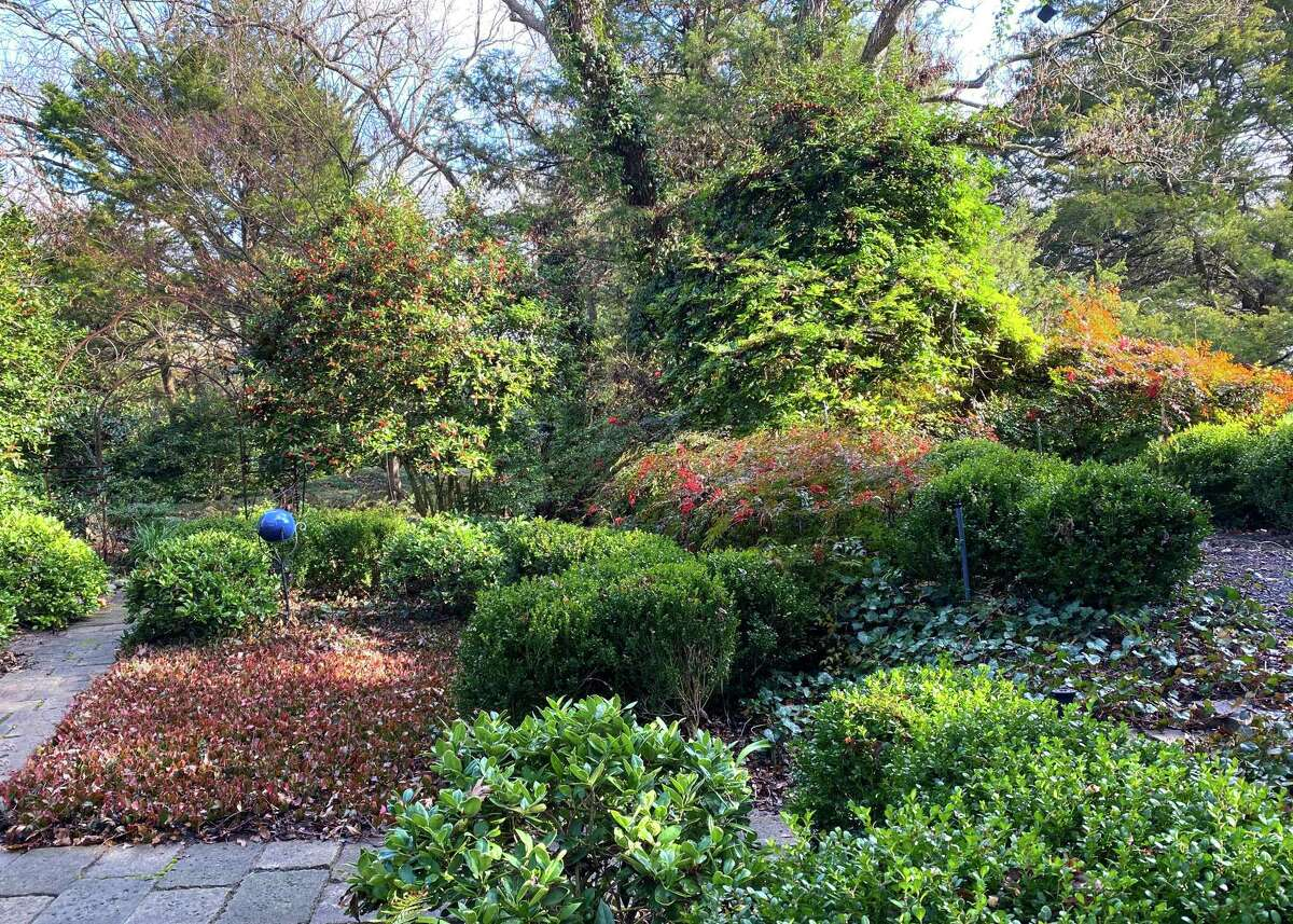 This is Neil Sperry's very shady front yard. He has planted shade-tolerant purple wintercreeper groundcover, many types of hollies, nandinas, boxwood and other shade-loving shrubs.
