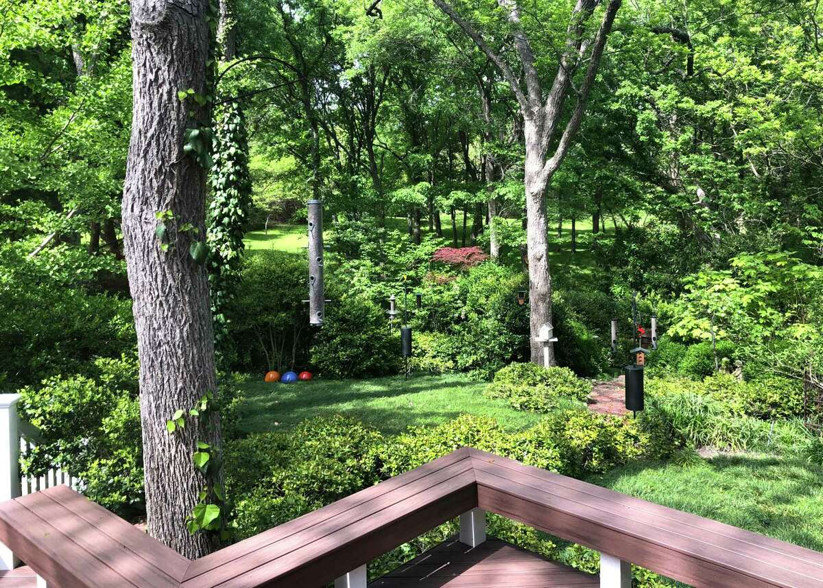 This is Neil Sperry's very shady backyard. He has planted shade-tolerant mondograss groundcover, many types of hollies and other shade-loving shrubs.