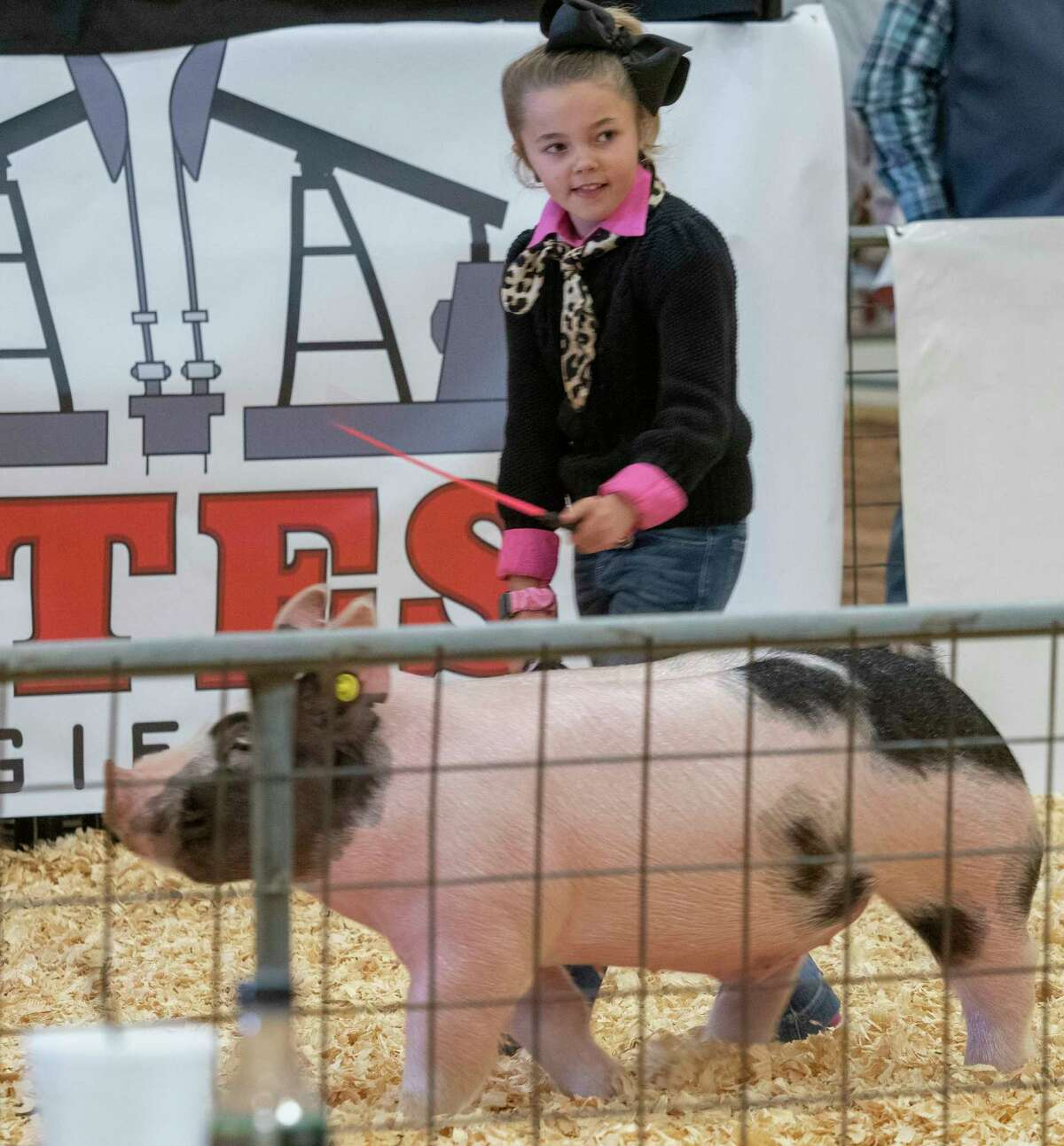 Kyndi Smith shows her Grand Champion swine 01/16/2021 during the auction at the 2021 Midland County Livestock Association Show at the Midland County Horseshoe Arena. Tim Fischer/Reporter-Telegram