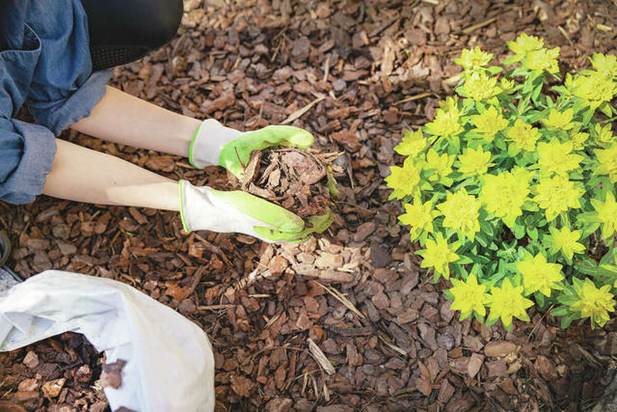 A Master Gardener program gives participants in-depth horticulture content through modules including such things as fertilizers, plant diseases, organic gardening and more.