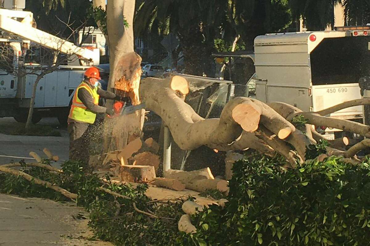 San Francisco Public Works had already responded to 68 calls for downed trees by mid-morning on Jan. 19, 2020.