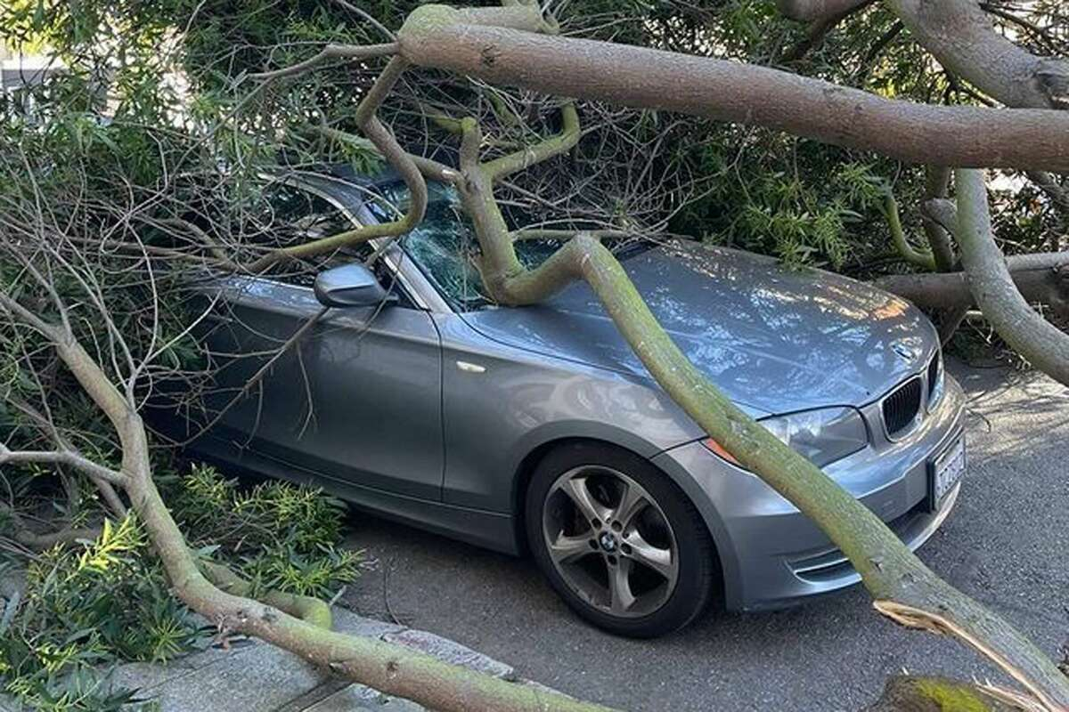 High winds knocked down branches of trees in San Francisco on Jan. 19, 2020.