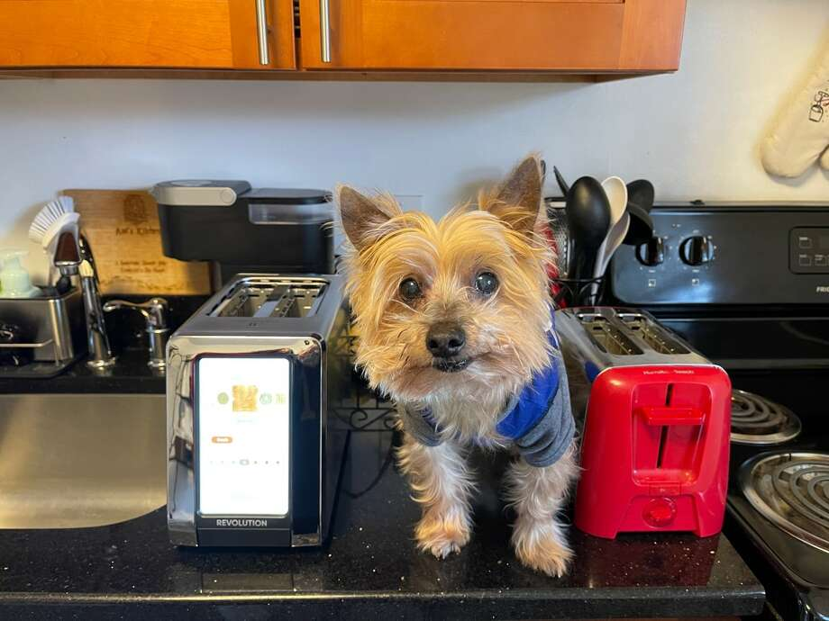 """Everyone loved seeing Tyrone for scale in my """"drinking a gallon of water a day"""" article, so here he is for scale with this toaster Photo: Ana Suarez For Hearst Newspapers"""