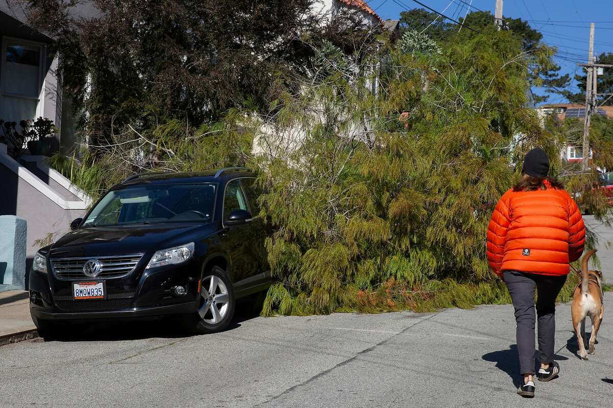 A downed tree hit a parked car along Moultrie Street between Eugenia Avenue and Cortland Avenue in San Francisco.