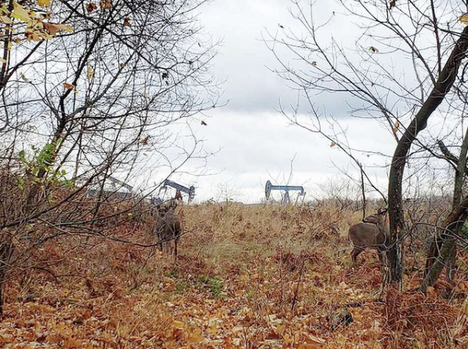 A group of deer near Man Made Lake in Manistee several days before opening of the 2020 firearm white-tailed deer hunting season. Photo: File Photo