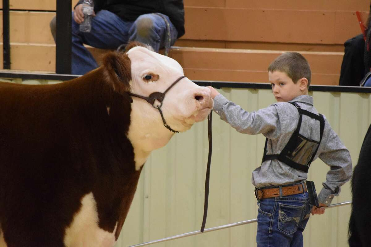 Participation in the Hale County Stock Show was mostly unaffected by the ongoing COVID-19 pandemic.