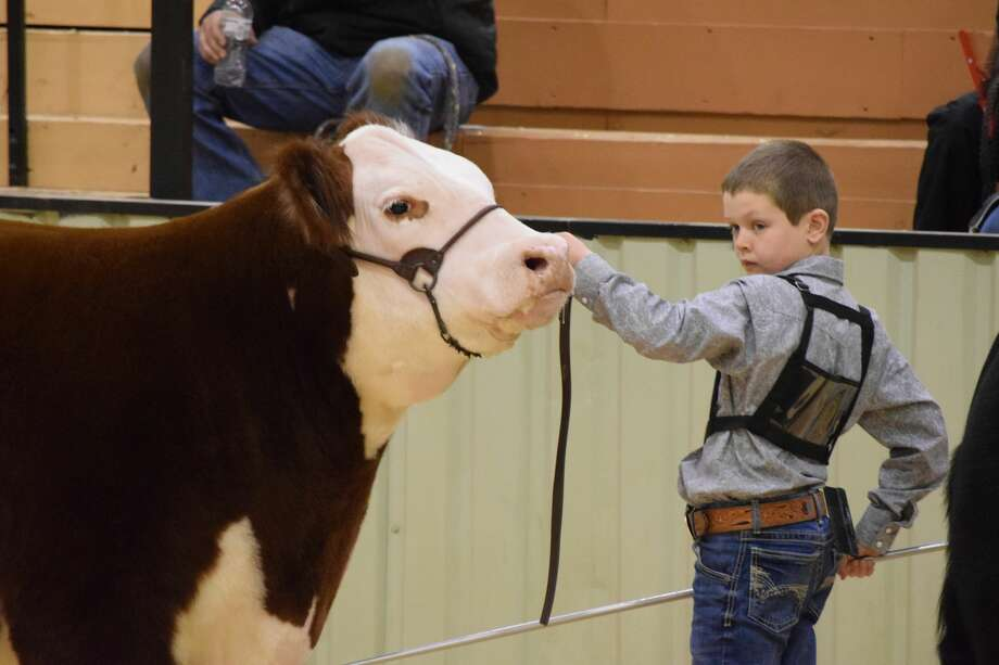 Participation in the Hale County Stock Show was mostly unaffected by the ongoing COVID-19 pandemic. Photo: Ellysa Harris/Plainview Herald
