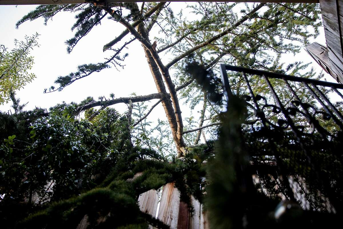 A tree is seen after falling on top of Jane Nylund's home in the Montclair area of Oakland, Calif. Tuesday, January 19, 2021 following a night and early morning of extreme winds across the Bay Area and beyond, causing multiple incidents of downed trees, power lines and other damage.