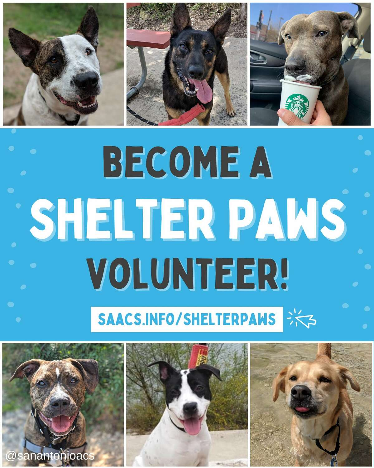 Have a one-day doggy date with 'Shelter Paws' at San Antonio Animal Care Services .