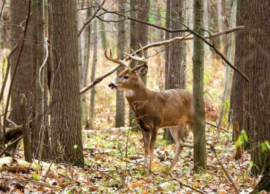 Mecosta County had 5,862 deer license customers as of Nov. 22. (Pioneer file photo)