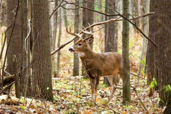 Mecosta County had 5,862 deer license customers as of Nov. 22. (Pioneer file photo)