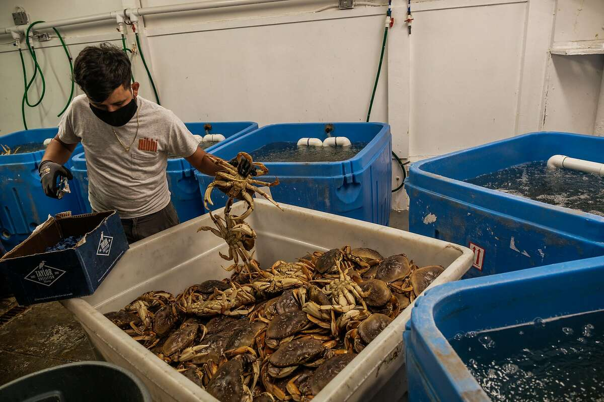 Jorge Cornejo puts rubber bands on the claws as Dungeness crabs are unloaded in San Francisco.
