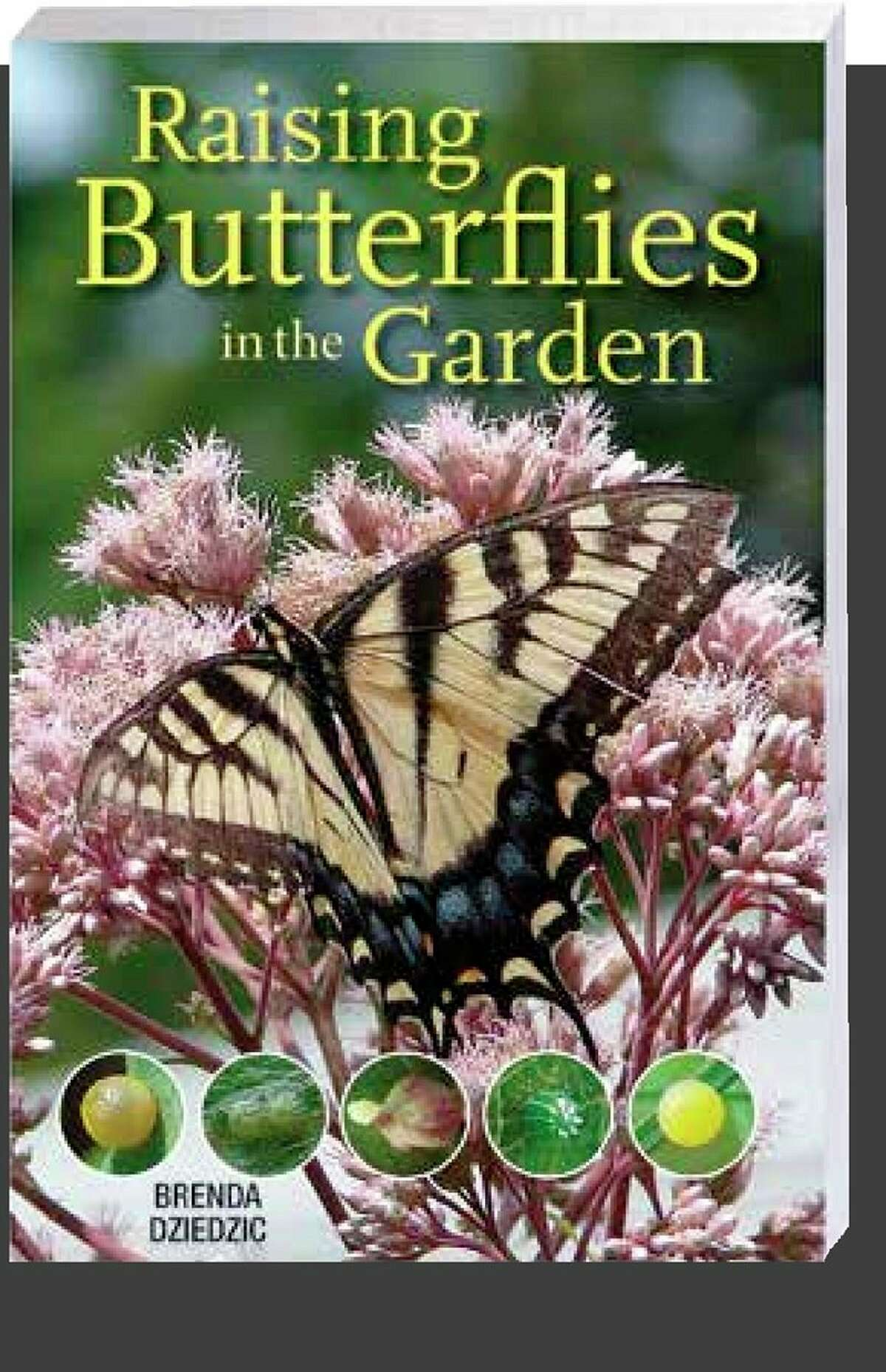 Brenda Dziedzic is the author of Raising Butterflies in the Garden and founder of