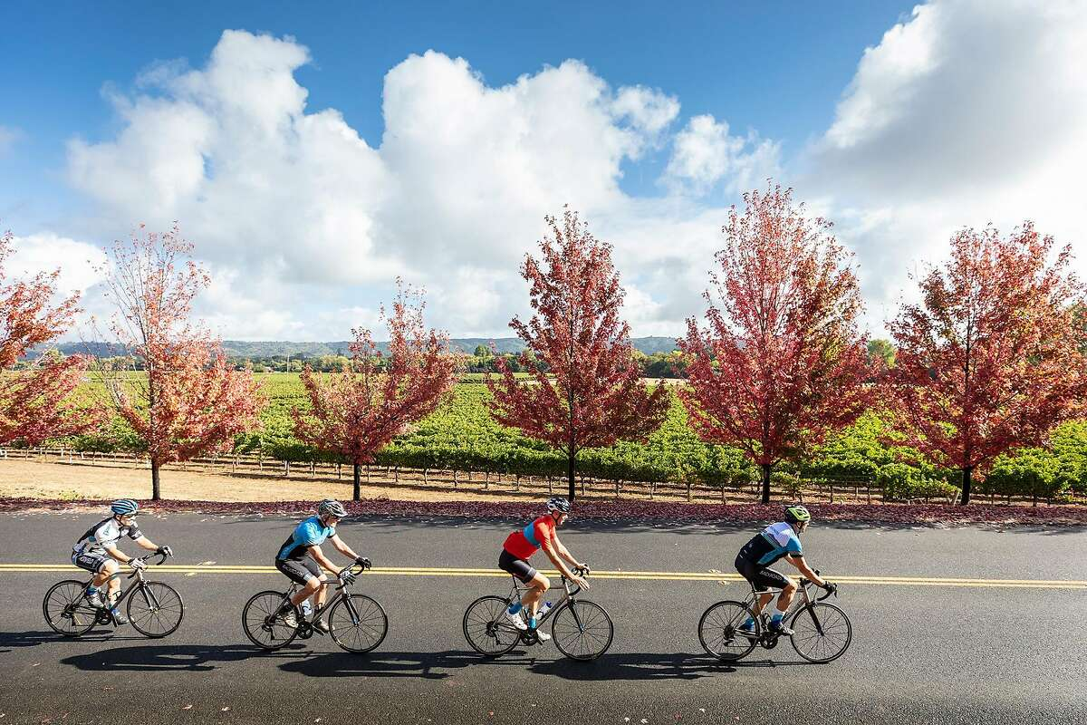 Cyclists ride through Sonoma County on a as part of a Backroads group tour.