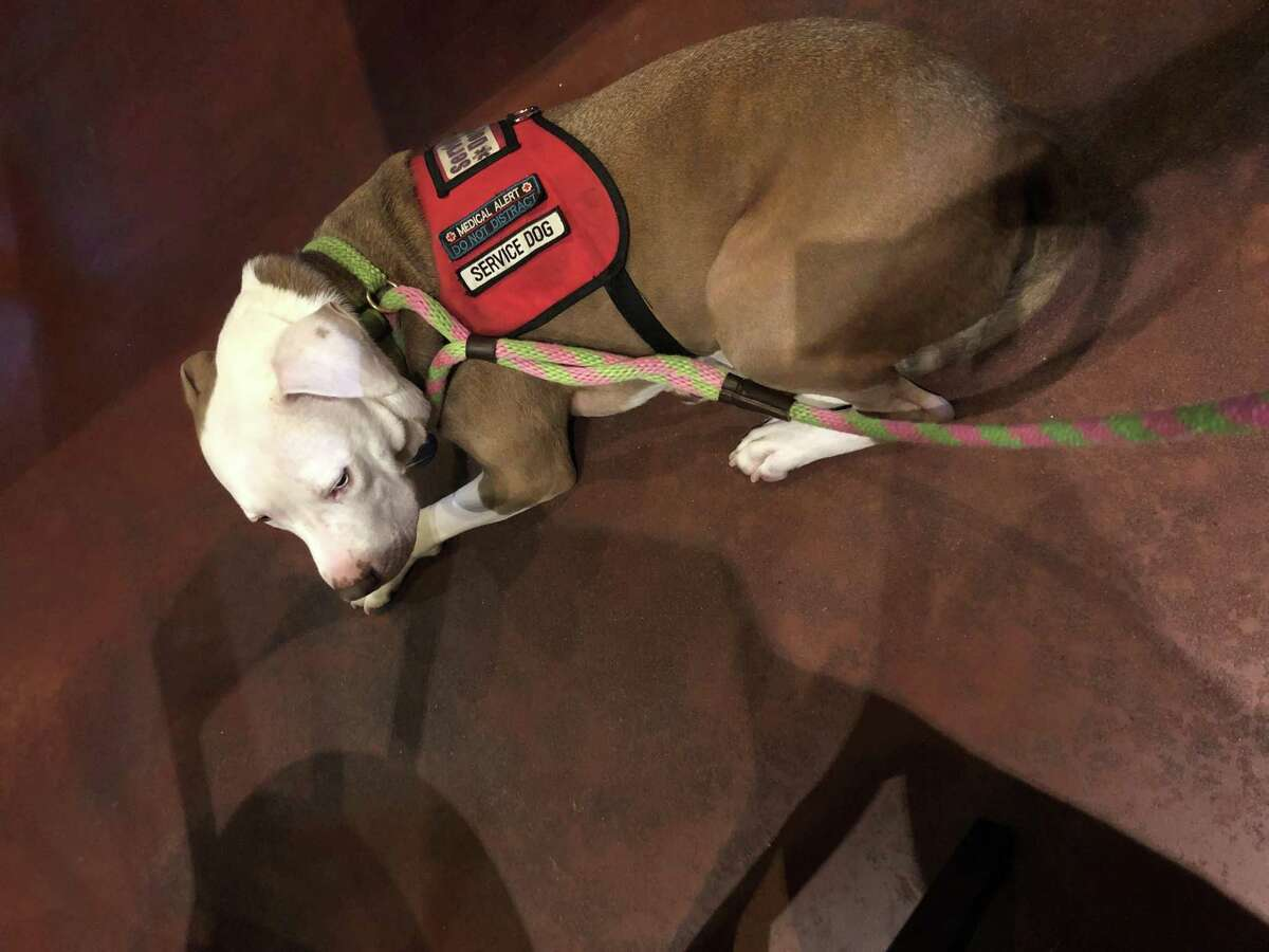 Kingston, a dog owned by Jennifer Romano, is accused of seriously injuring a 3-year-old girl in a Jan. 9 attack at a Spring restaurant. Montgomery County officials began a hearing on Friday to determine whether he should be euthanized or returned to his owner.