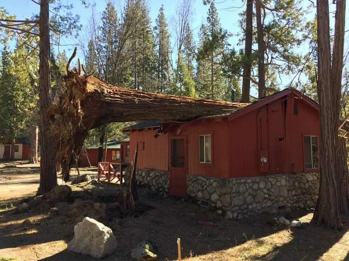 A photo shows a fallen tree on a building in Wawona, Yosemite National Park, after a Jan. 18-19 wind event.