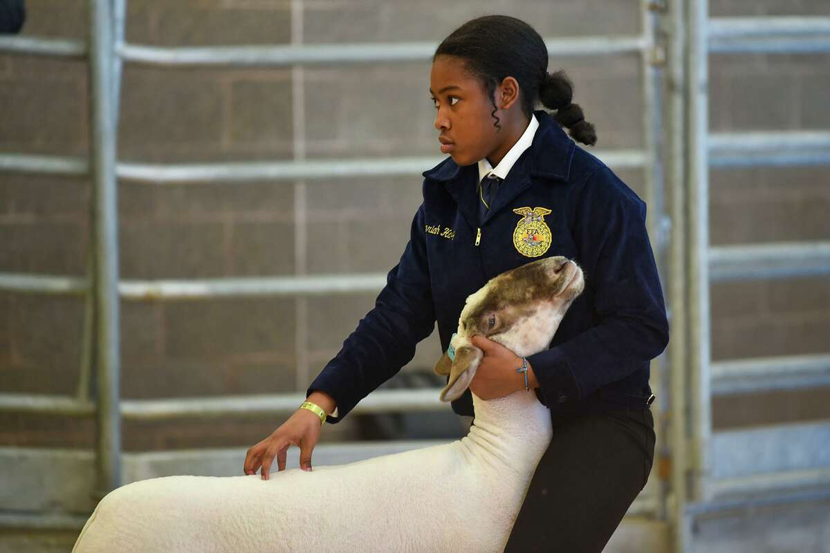 In this photo from before the pandemic, a Cy-Fair ISD student participates in a previous year's CFISD Livestock Show Association Show and Sale.