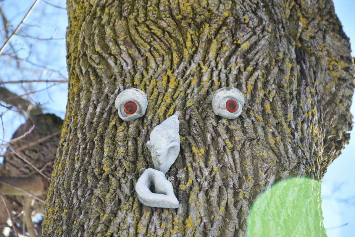 A face looks down at pedestrians from a tree on First Street.