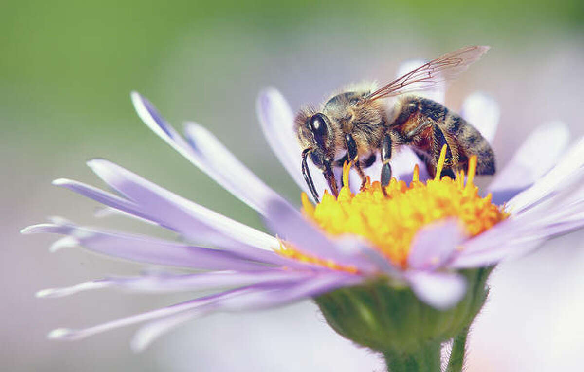 A study found low levels of attention to pollinator population topics over several decades, even compared with what many would consider limited coverage of climate change.