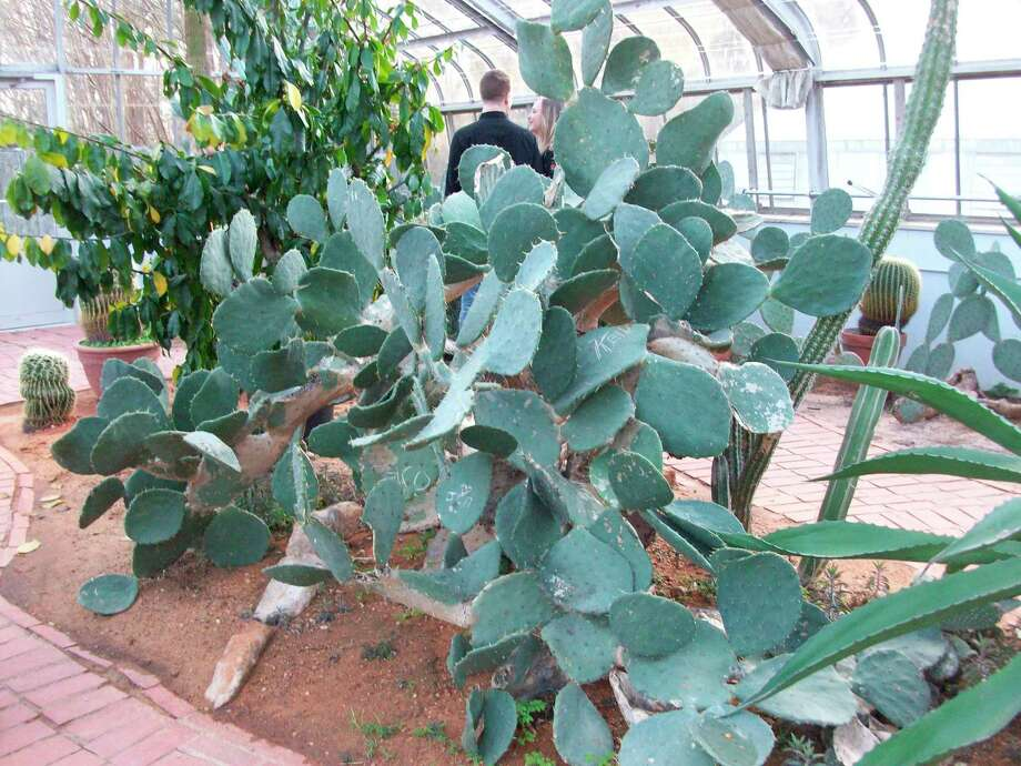 Pictured is a large cactus found at the Birmingham Botanical Gardens in Birmingham, Alabama. (Courtesy photo)