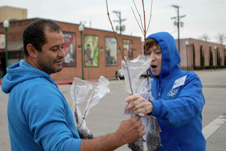 Conroe resident Victor Almendarez takes a few free trees from Sherry Kleene, Montgomery County Master Gardener Association intern, during Arbor Day on Saturday, Feb. 16, 2019 at Founder's Plaza in Conroe. Arbor Day in Conroe returns on Feb. 27 in downtown Conroe. Photo: Cody Bahn, Houston Chronicle / Staff Photographer / © 2018 Houston Chronicle