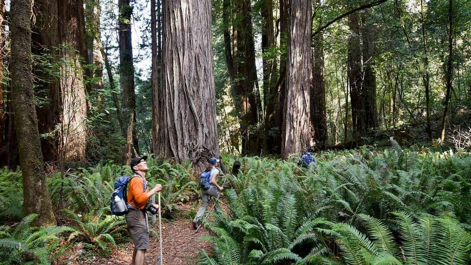 Should we hide the locations of Earth's greatest trees?