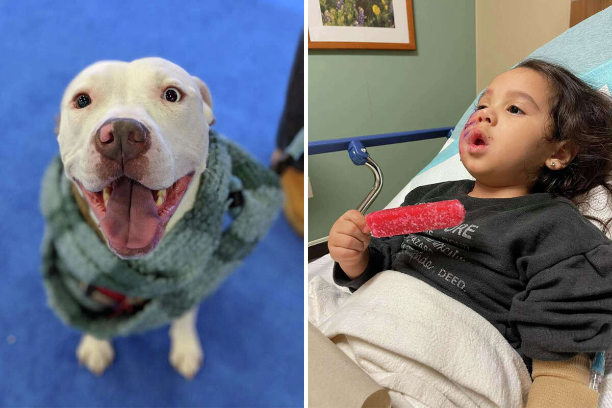 A Montgomery County judge ordered that Kingston, a dog who attacked a 3-year-old girl in a Spring restaurant earlier this month, be euthanized.
