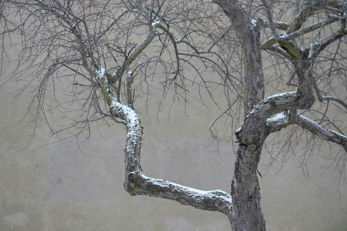 Snow collects on a tree in Kennedy Park in Danbury, Conn, on Tuesday afternoon, January 26, 2021,