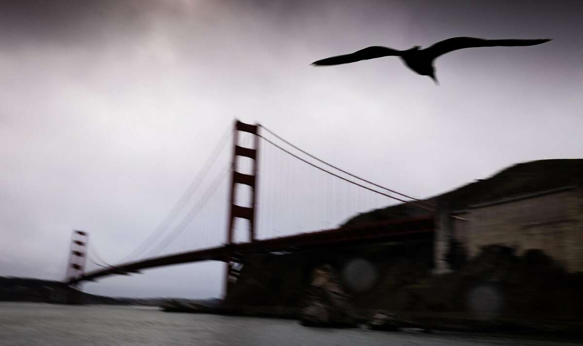 A seagull flies below the Golden Gate Bridge in Sausalito, Calif. on January 26th, 2021