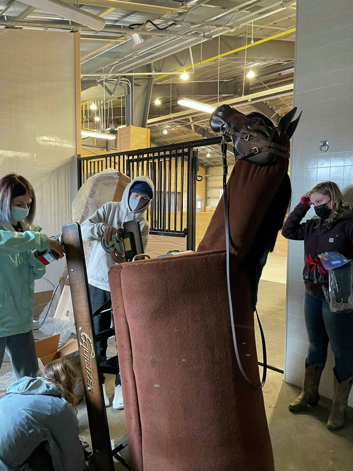 Students grooming Maverick, the mechanical horse
