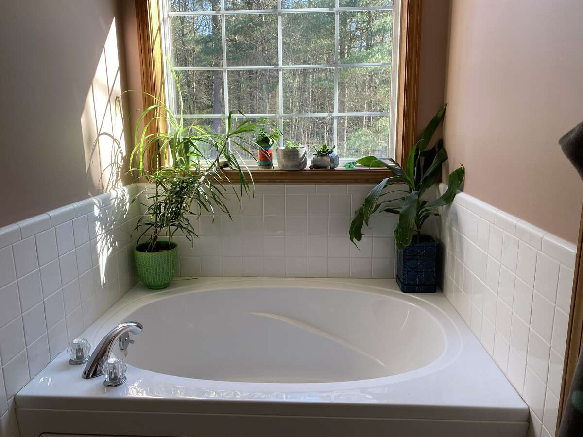 Bathtub is a great perch for plants in Leigh Hornbeck's house. Otherwise, it is unused.
