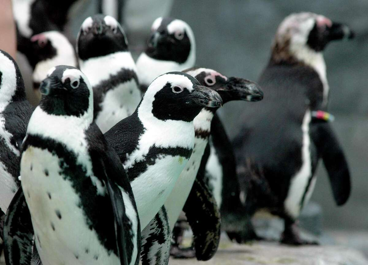 Meet the penguins at the Penguin Pavilion at Mystic Aquarium.