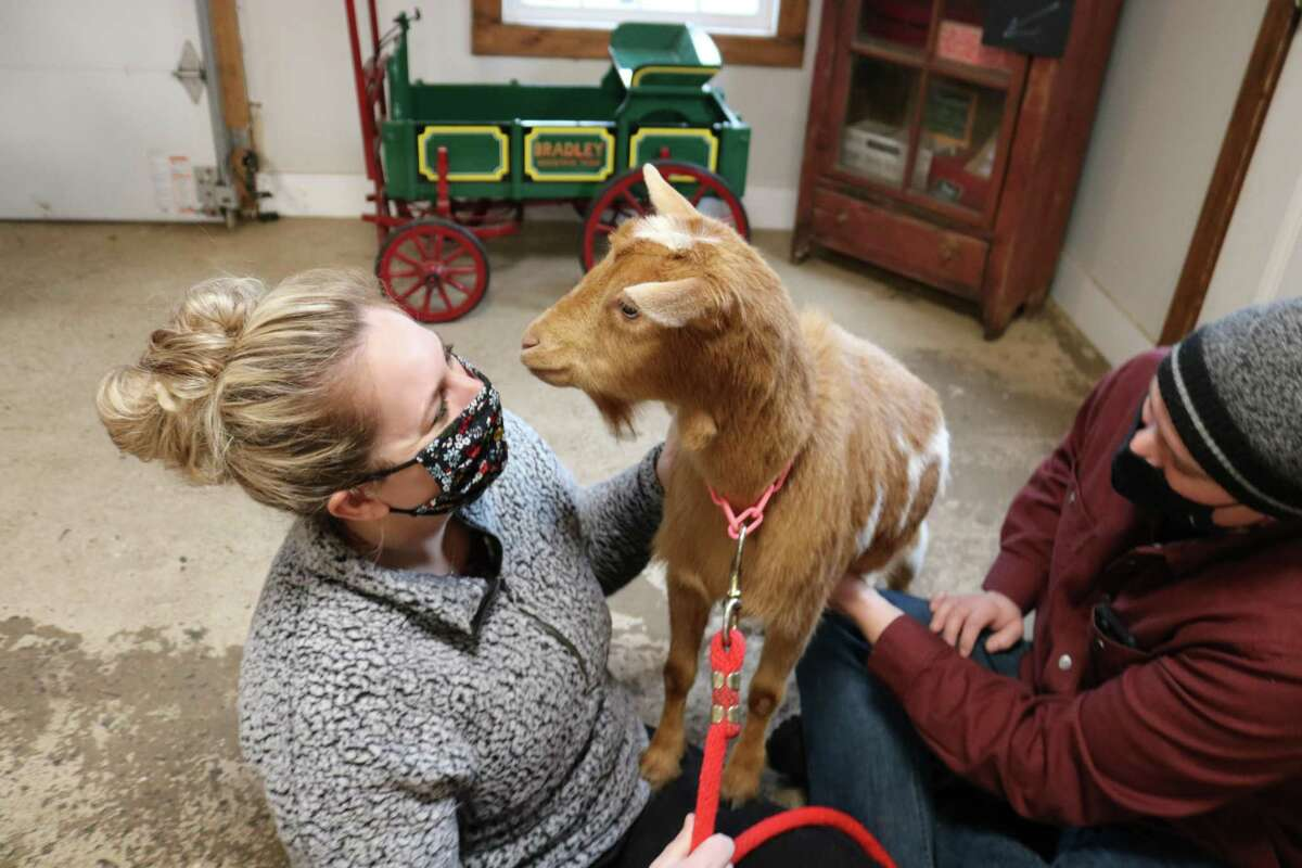 Bradley Mountain Farm offers goat strolling and snuggling sessions.