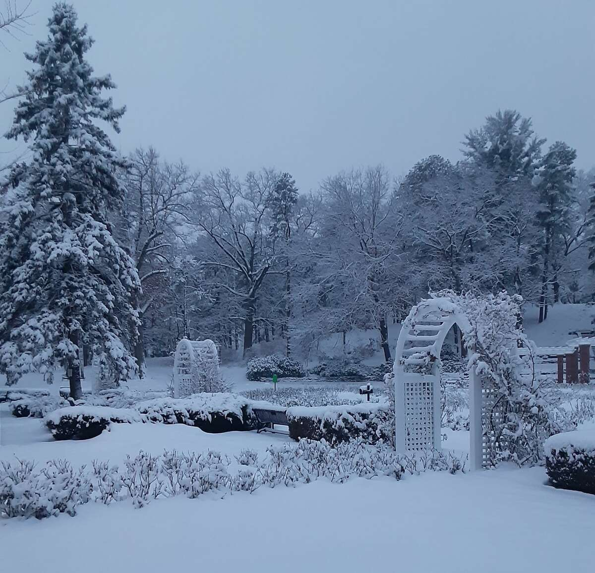 This was taken in early January. Central Park Rose Garden, Schenectady Rob Lang