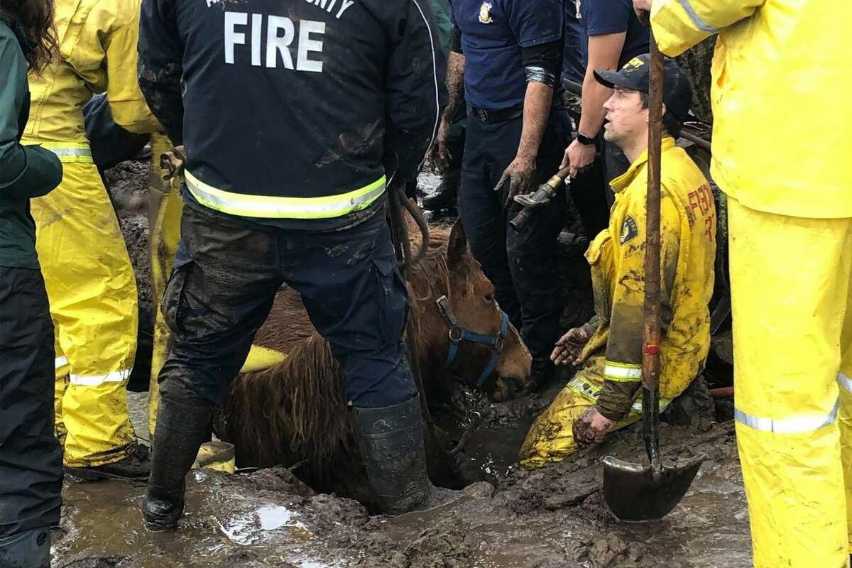 Multiple agencies responded to rescue a horse and a pony that were found stuck in mud on Limekiln Road in Salinas, Calif., off of River Road on Thursday, Jan. 28, 2021. The area experienced mudflow debris that trapped the two equine animals.