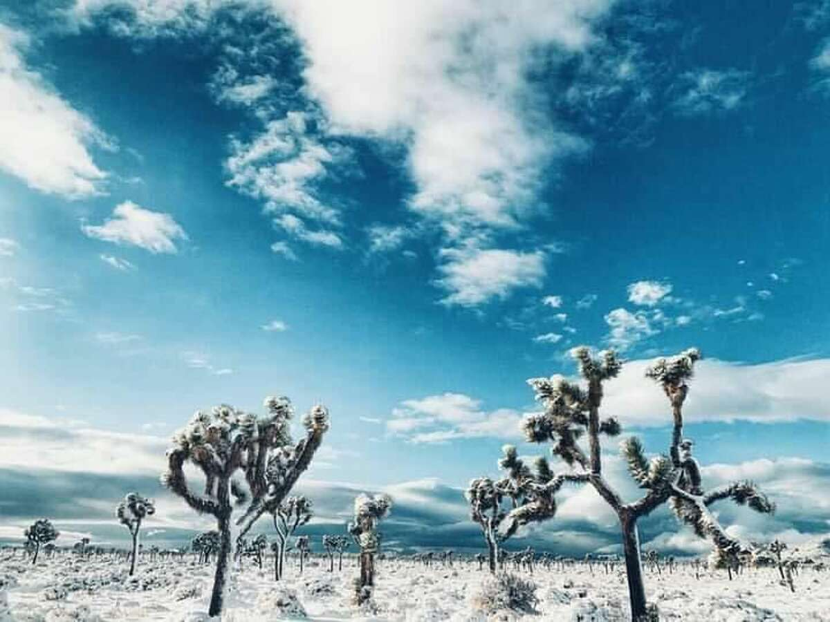 Temperatures in the park can fall below freezing, according to the Joshua Tree National Park Association. This can bring about hail and snow, which are not unheard of.