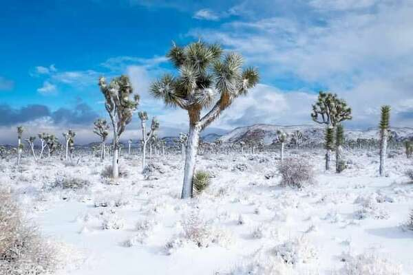 Rare snow covers the usually dry and hot Joshua Tree State Park as the Winter season continues in late January, 2020.