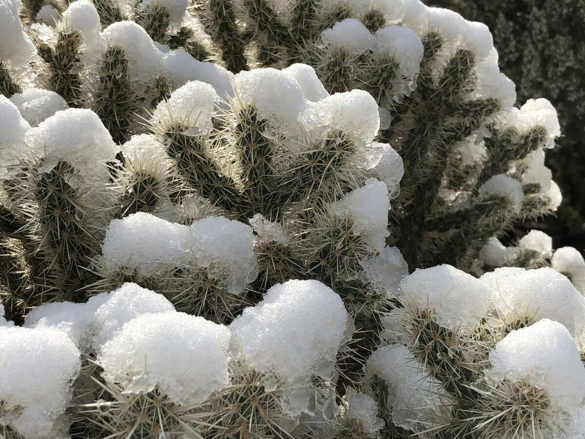The plant life at Joshua Tree dusted with snow during the winter.