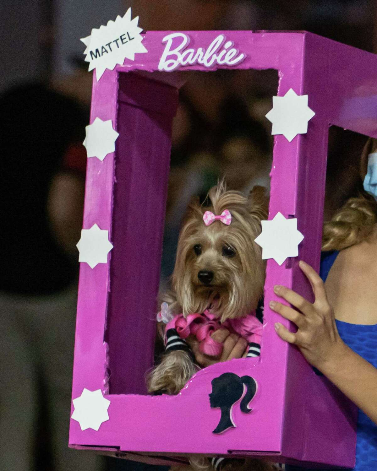 PawzUp DogFest is hosting its first event of 2021 in LOVE STINKS: A VALENTINES DOG FESTIVAL Saturday, Feb. 6 at 10 am-noon, at CityPlace Springwoods Village in Spring. The organization's last festival, DOGULA, was a Halloween themed event.
