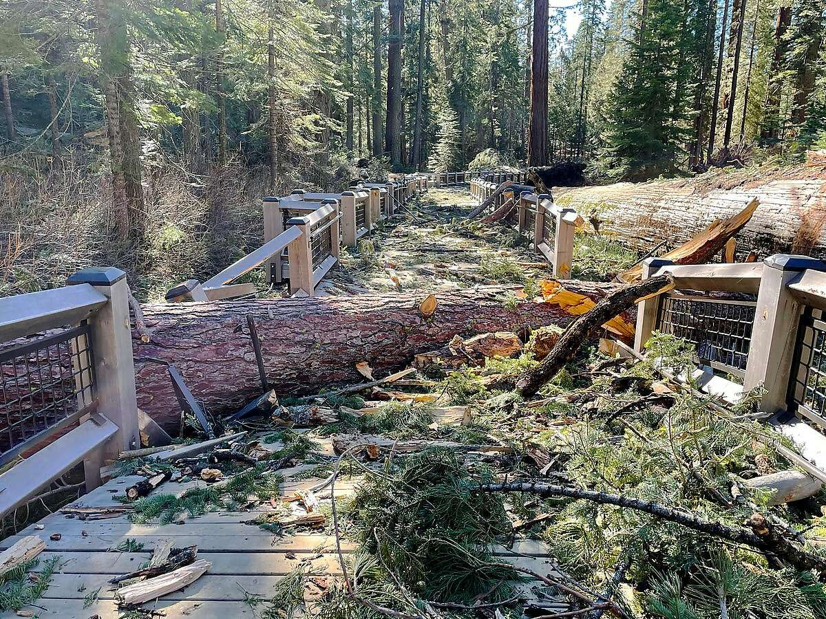 The Mariposa Grove in Yosemite National Park has been closed indefinitely because of damage sustained in a Jan. 19 windstorm.