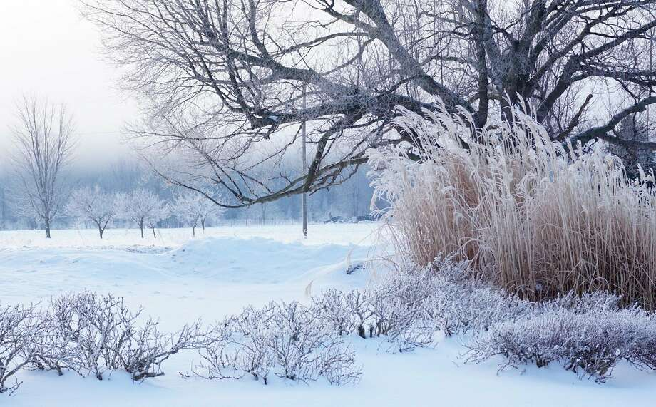The Kellog Bird Sanctuary is hosting an online seminar on identifying trees in the winter. (Courtesy Photo/Pixabay)
