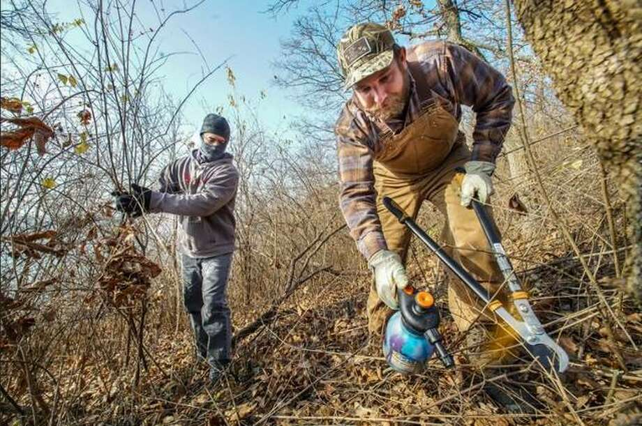 Conservation program manager Justin Shew (left) and projects manager Ted Kratschmer work to remove bush honeysuckle in Palisades Nature Preserve near Grafton. Photo: Provided