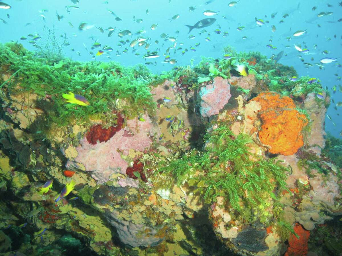 Colorful sponges and bright green algae adorn the cap of Bright Bank, which is shallow enough to scuba dive.