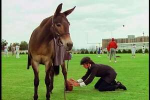 Field goal-kicking mule Gus, helped out here by his owner, Andy (Gary Grimes), during his tryout for a Super Bowl-bound football team. (Disney)