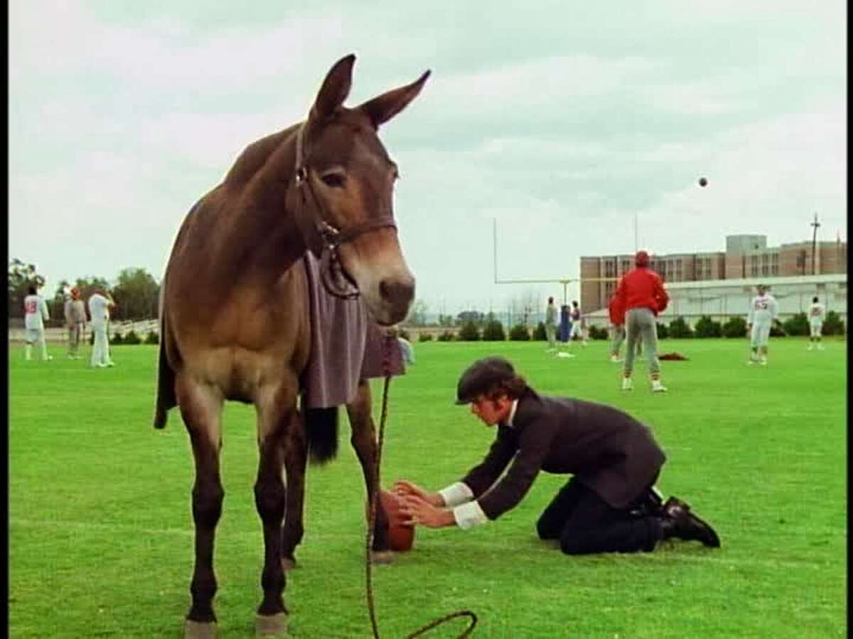Field goal-kicking mule Gus, helped out here by his owner, Andy (Gary Grimes), during his tryout for a Super Bowl-bound football team in the 1976 Disney comedy