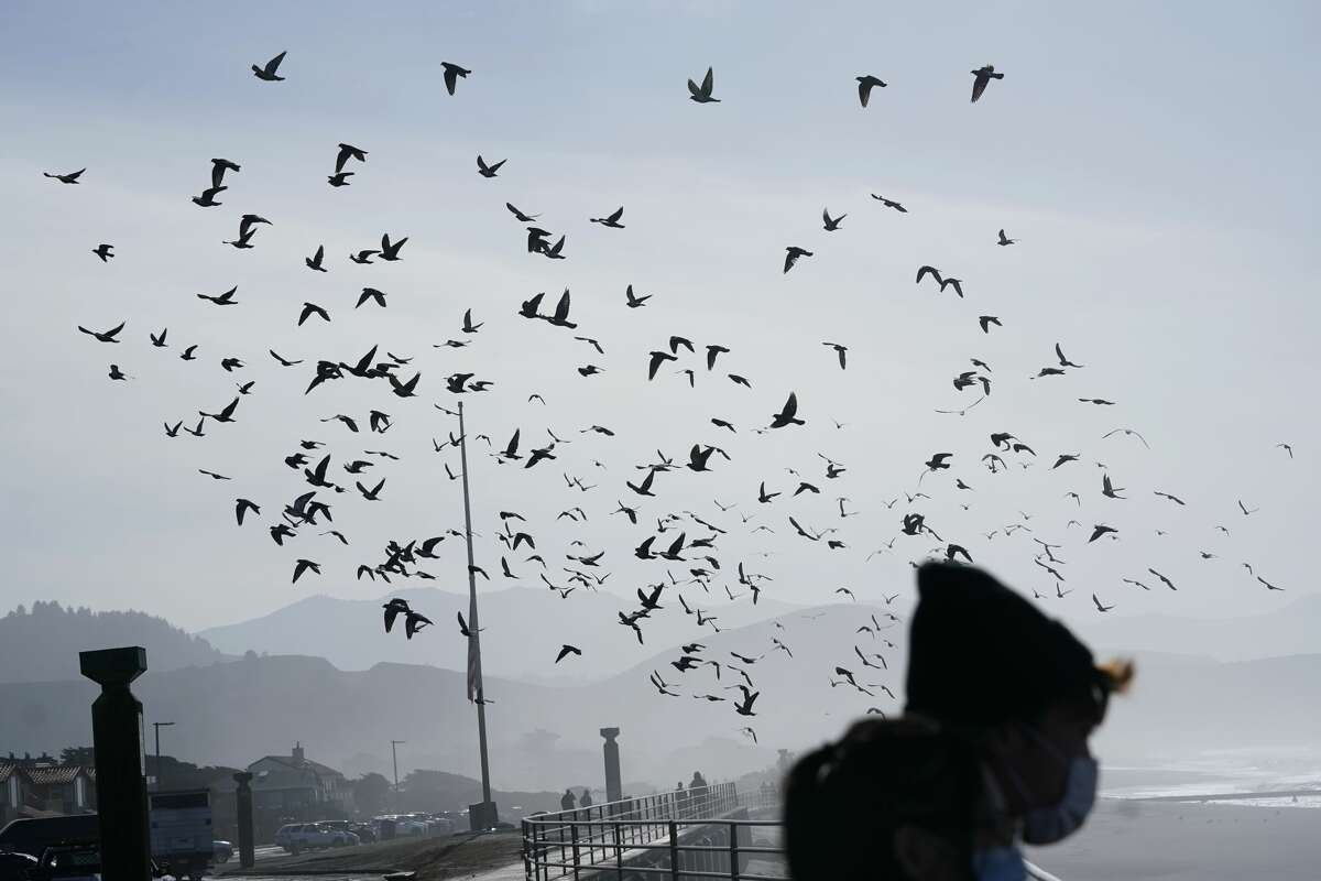 Birds fly near Pacifica Pier in Pacifica, Calif., Monday, Jan. 11, 2021.